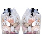 Assorted Sea Shells - 2 Packages