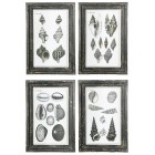 Seashells Illustration Wall Art - Set of 4